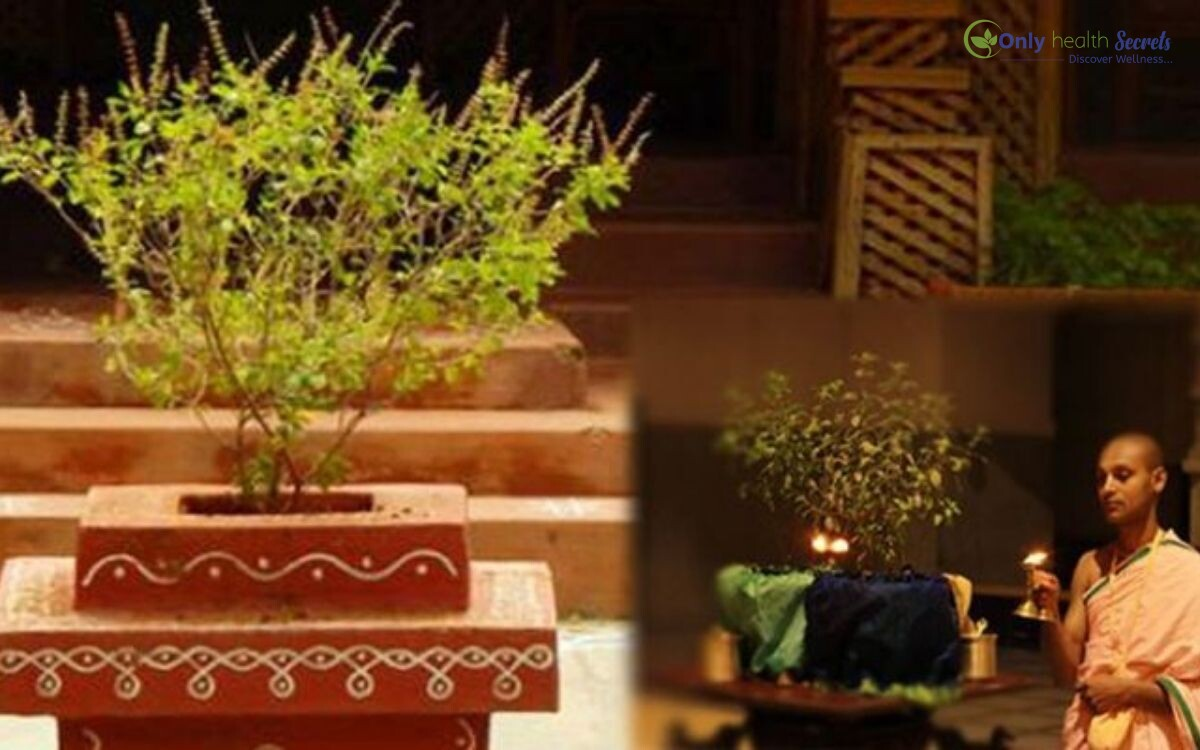 Worshipping the Plant of Tulsi